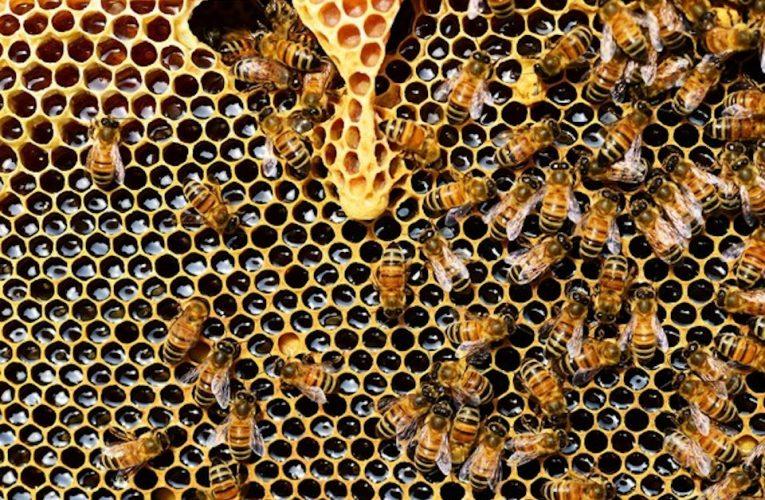 [蜂蜜資訊] 蜂蜜小知識