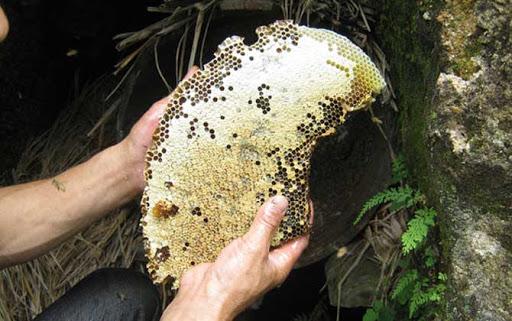 [蜂蜜資訊] 男人喝蜂蜜的好處