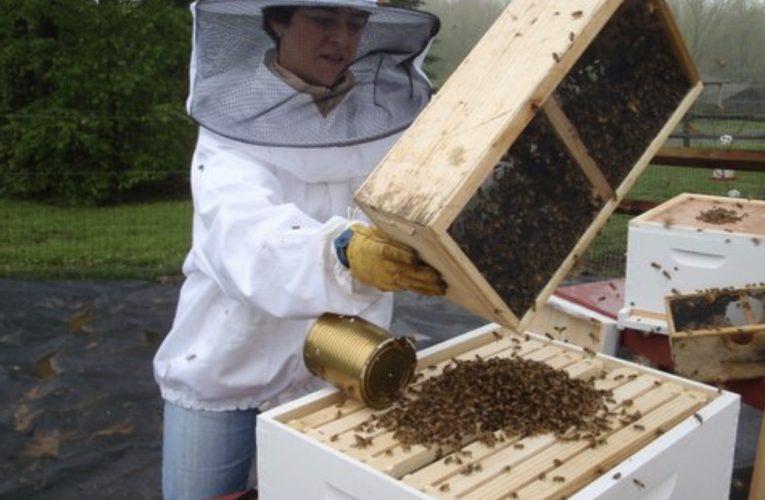 CLAIRE MARIN:CATSKILL PROVISIONS 聯合創始人兼養蜂人